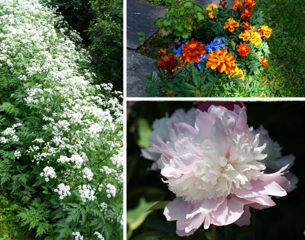 Summer flowers by Peony and Parakeet