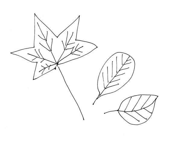 three leaves , a stick figure drawing