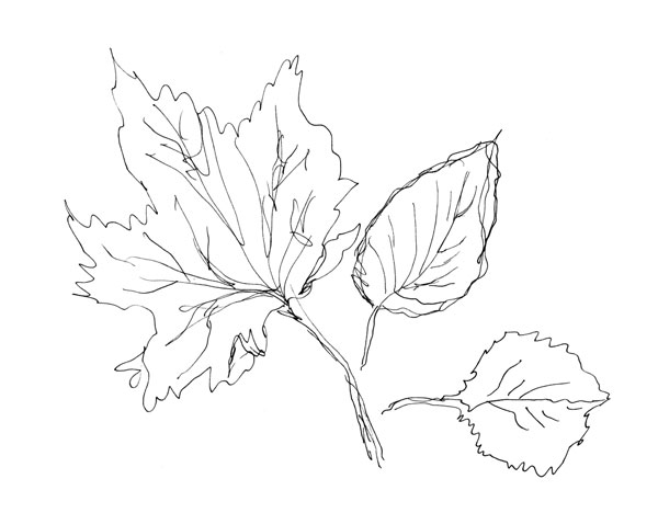 three leaves, drawn without a model