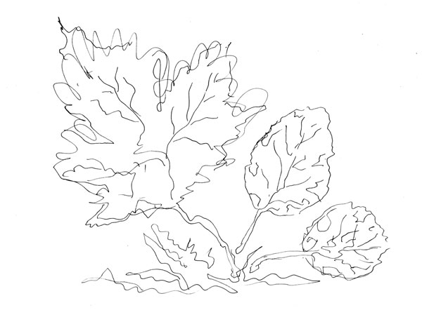 Three leaves, a line drawing by Peony and Parakeet