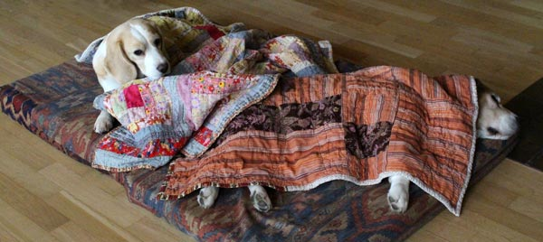 Beagles with quilts by Peony and Parakeet