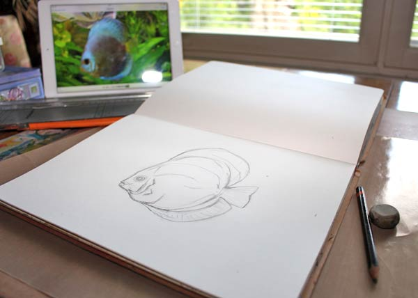 Sketching a discus fish by using a photo as a guideline, by Peony and Parakeet