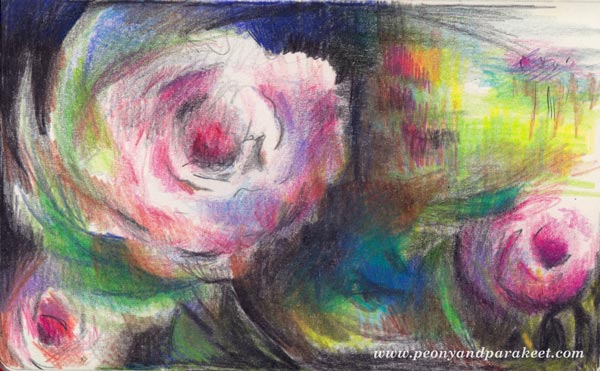 Roses drawing by Peony and Parakeet, watch the video of drawing and coloring roses with colored pencils!