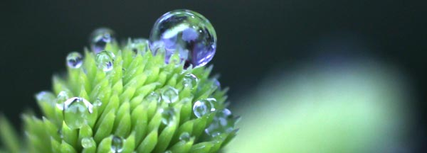 Dewdrop, spruce, nature photography, Finland