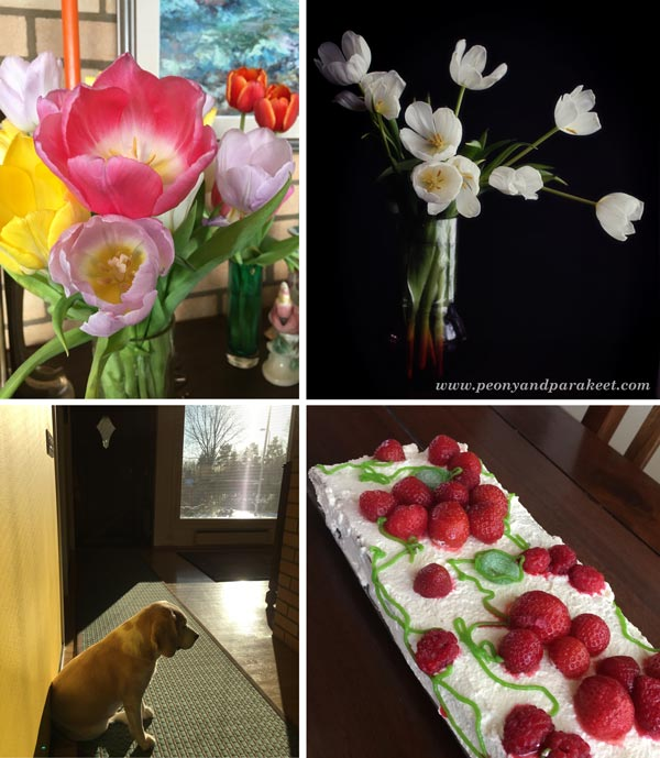 Photo collage from February: tulips, birthday cake, winter sun.