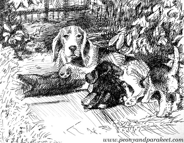 """Hilppa's puppies"". A line drawing by Paivi Eerola from Peony and Parakeet."