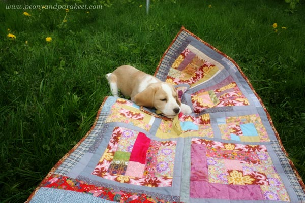 Stella the beagle and her quilt. By Paivi Eerola from Peony and Parakeet.