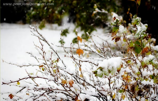 Winter in the garden. A photo by Paivi Eerola from Peony and Parakeet.