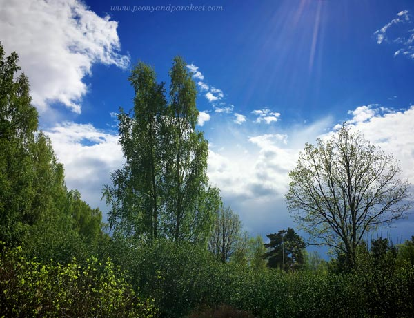 Spring Sky. A photo by Paivi Eerola from Peony and Parakeet.
