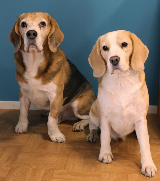 Cosmo and Stella, Paivi Eerola's pets. Read how she describes her life as an artist working from home with pets.