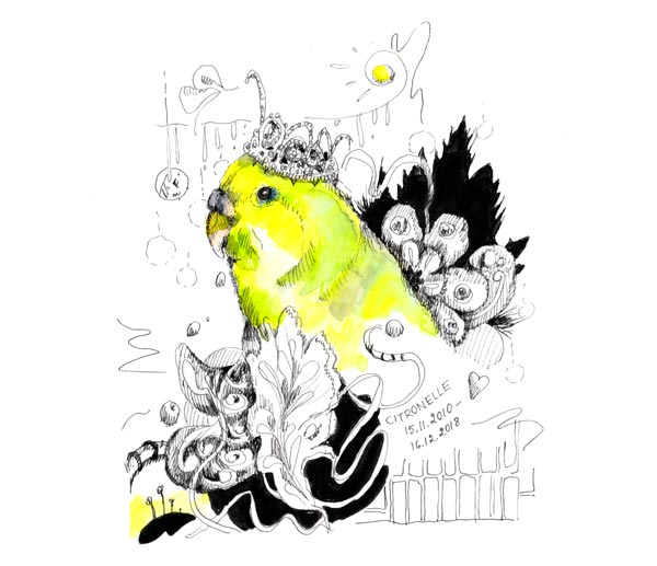 Citronelle, a drawing by Paivi Eerola from Peony and Parakeet