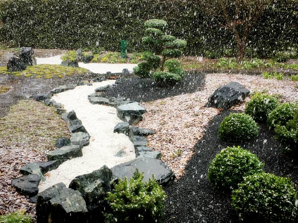 Snowing in a Japanese garden.