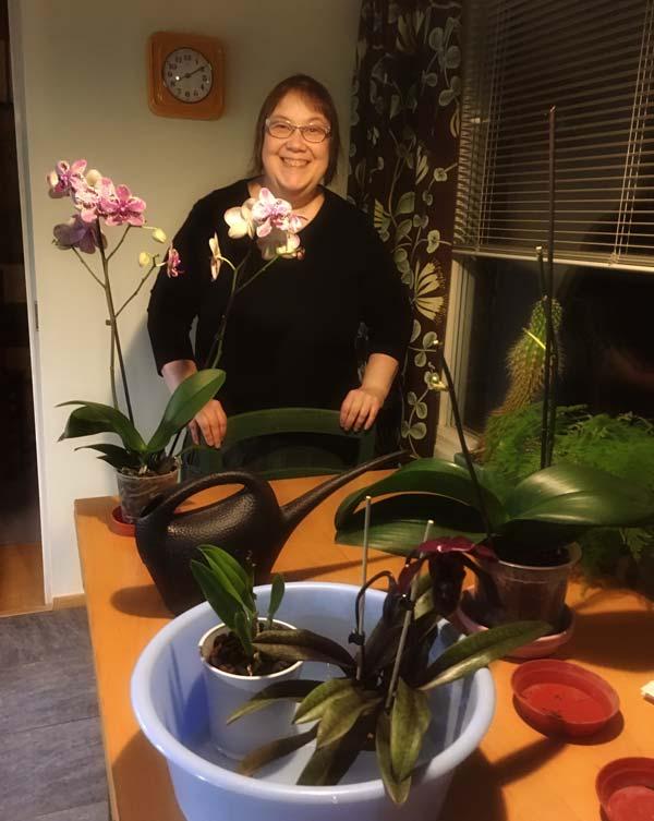 Finnish artist Paivi Eerola watering her orchids