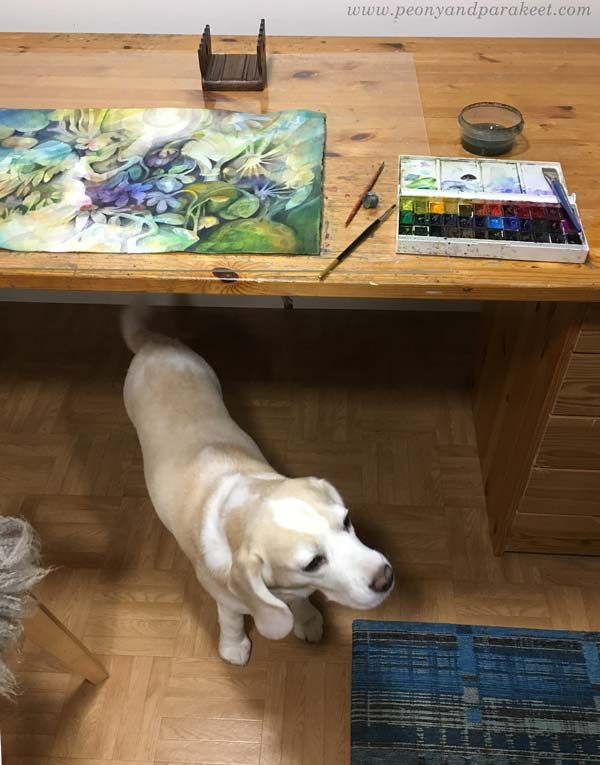 Watercolor painting session in a studio. A studio dog is watching.