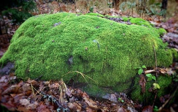 Stone covered with moss.