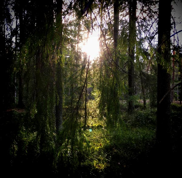 Sun shines in the forest.