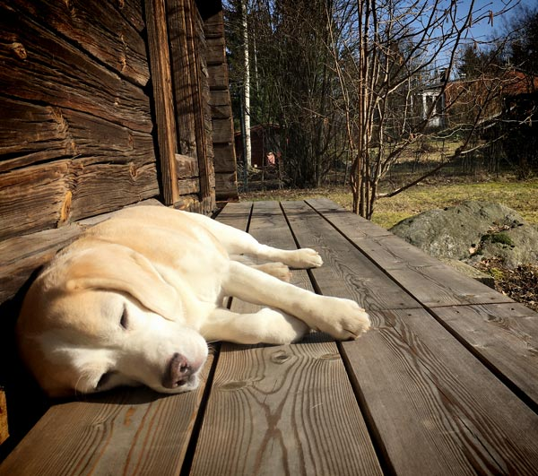 A dog lying in the sun and enjoying spring.