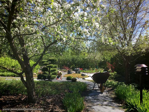 Garden view with flowering trees.