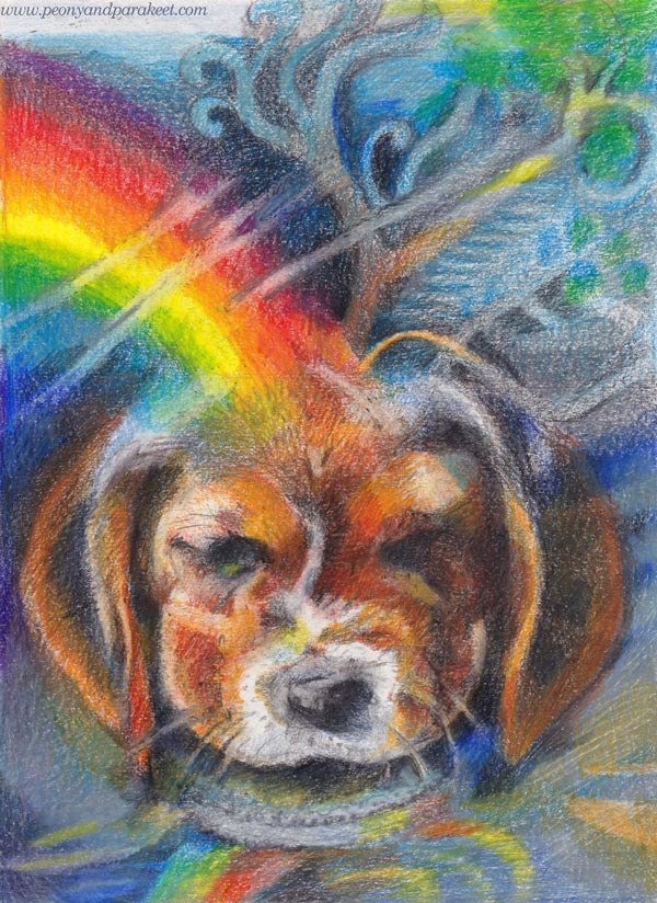 A beagle puppy in colored pencils. By Paivi Eerola of Peony and Parakeet.