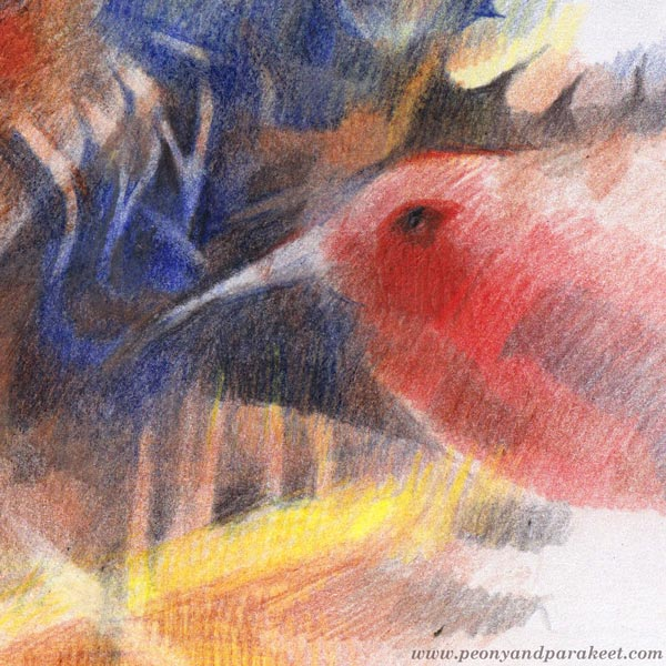 A detail of a colored pencil drawing by Paivi Eerola of Peony and Parakeet.